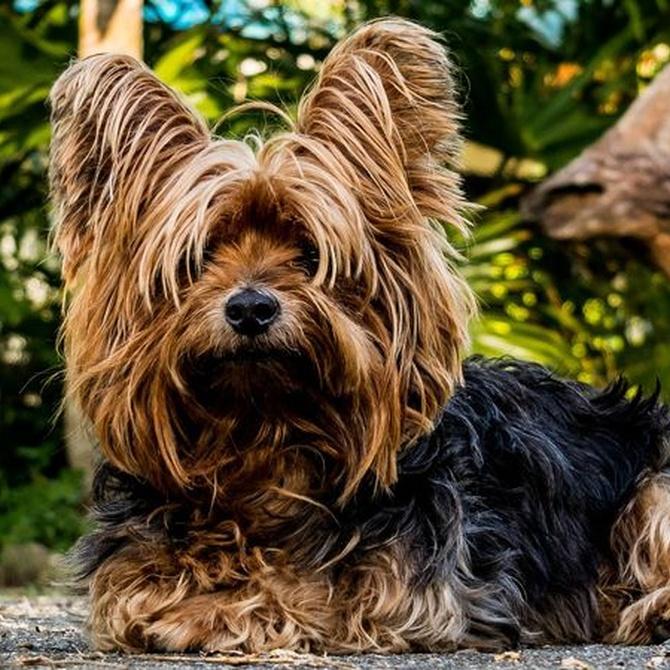 Peluquería canina: un oficio vocacional