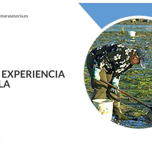 Asesorías fiscales, laborales y contables en Vilagarcía de Arousa | Asemar