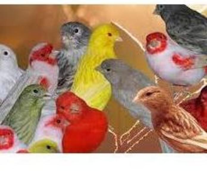Aves: Productos de Aquarama