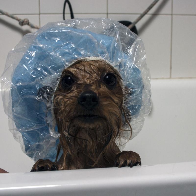 Estilista de mascotas: Servicios Veterinarios de Hospital Veterinario Ciudad Real