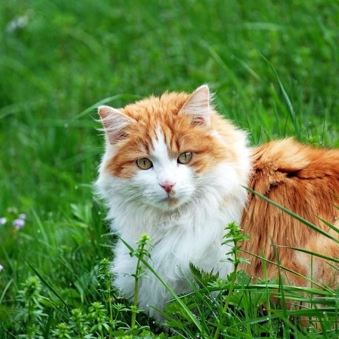 ¿Qué alimentos tienen prohibidos los gatos? (I)