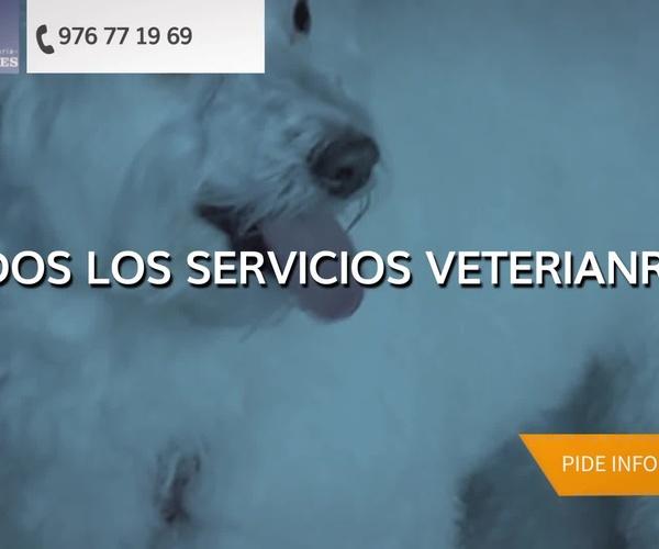 Clínica veterinaria en Utebo: Clínica Veterinaria Peludines
