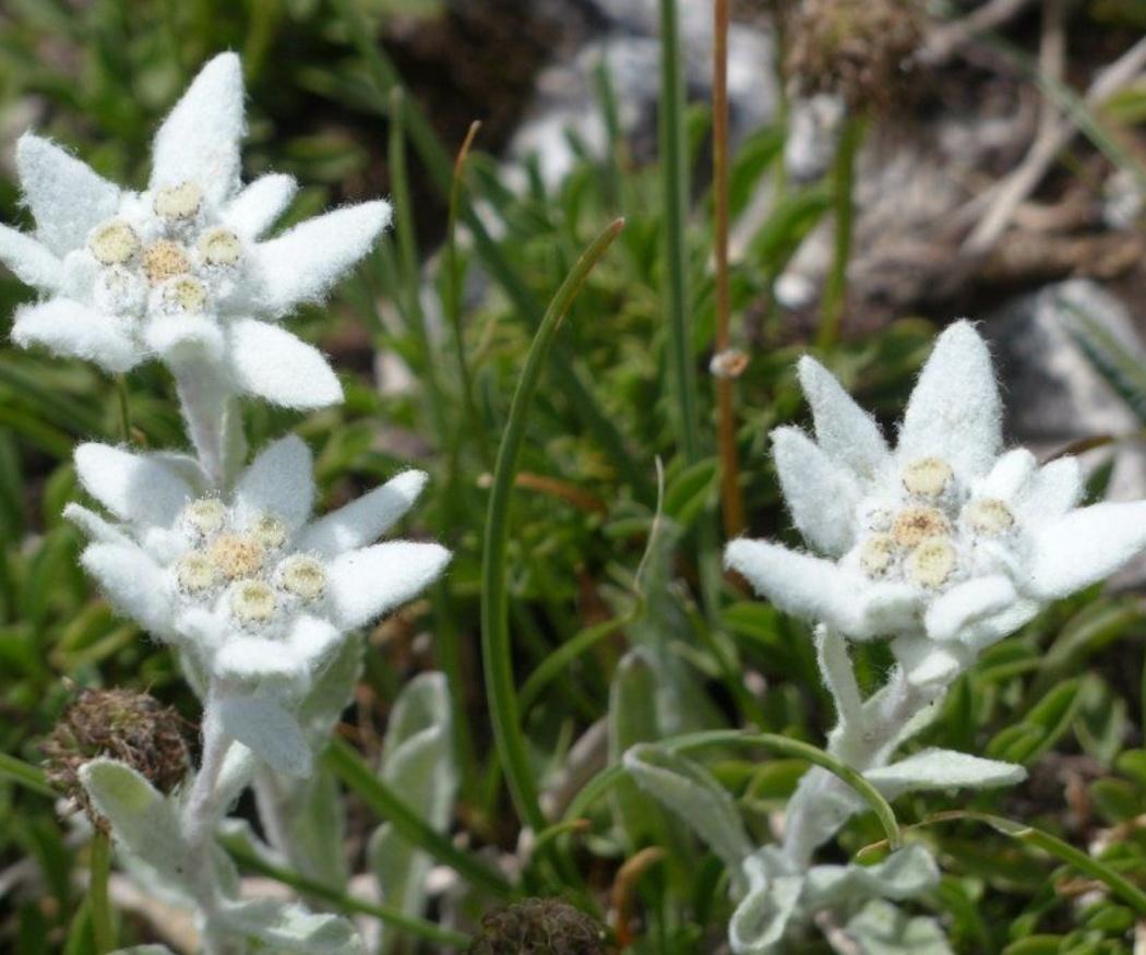 Las flores más raras del mundo