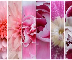 Arte floral en Molins de Rei