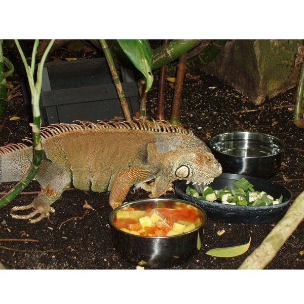Reptiles: Productos de Casa Clemente