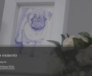Tanatorio y crematorio de mascotas en Alzira, Valencia | Funema Alzira