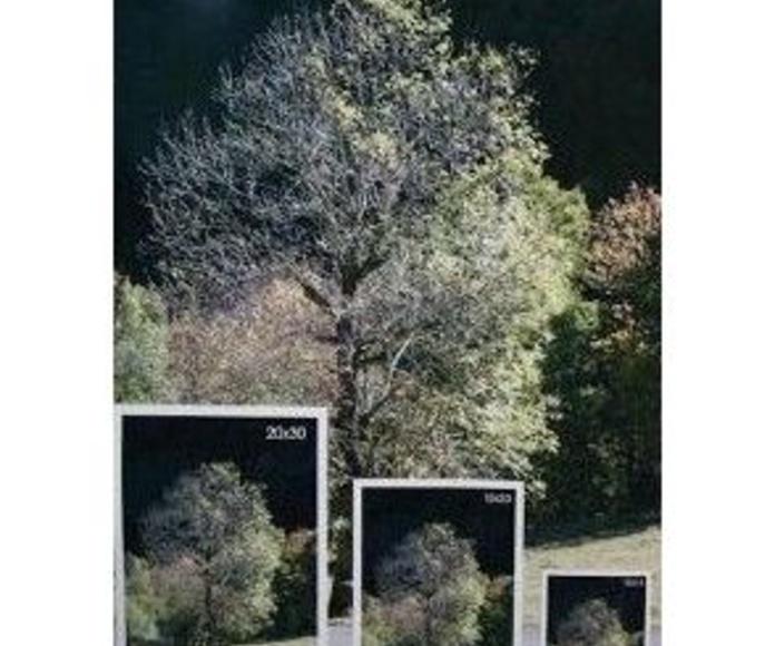 Impressió digital en gran format: Productes i serveis de El Trèvol Màgic - Riera8