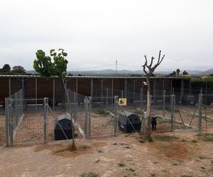 Residencia canina en Alzira