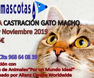 Gran campaña de castración de gato macho en Molina de Segura