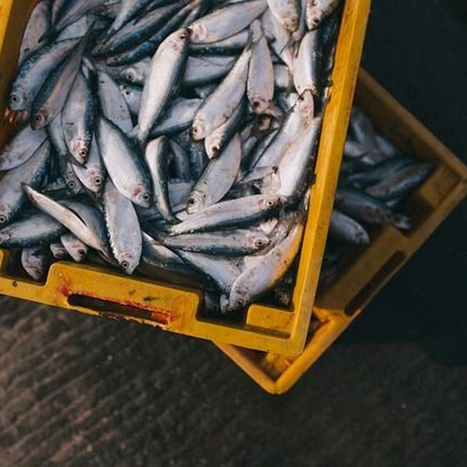 Tipos de pescados y mariscos