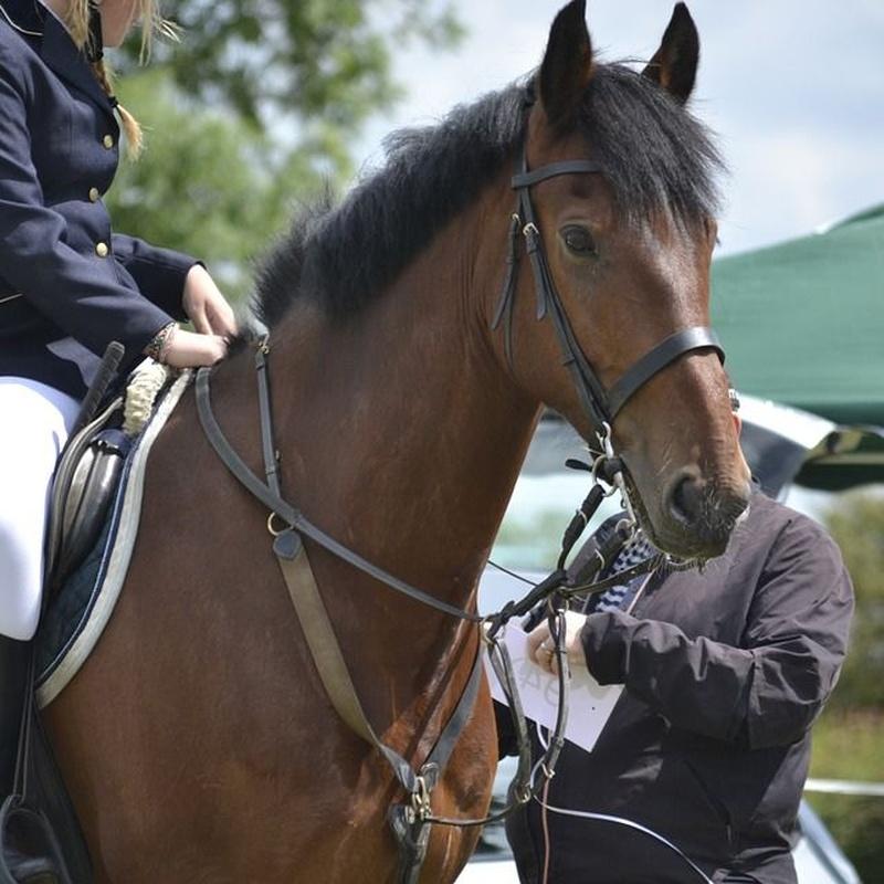 Clases de equitación: Servicios de Club Hípico El Álamo