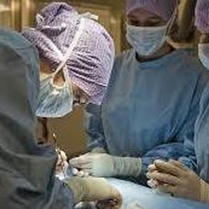 Otras especialidades: Servicios de Clínica Veterinaria Plutos