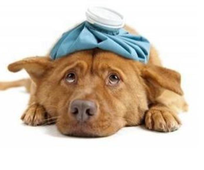 URGENCIAS: Servicios de Clínics Veterinària