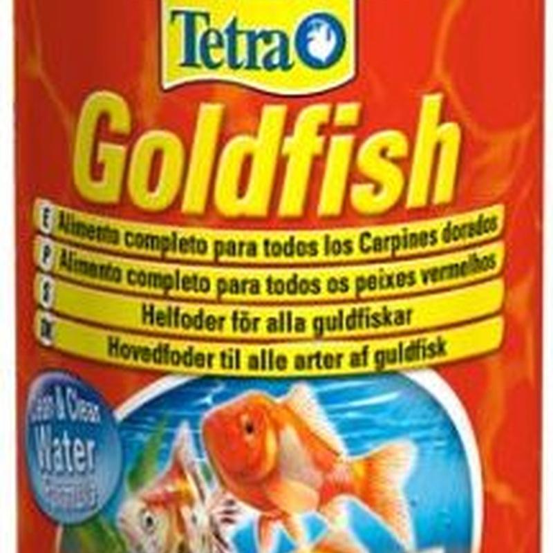 Tetra Goldfish.