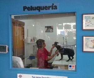 Galería de Veterinarios en Arrecife | Clínica Veterinaria Jameos
