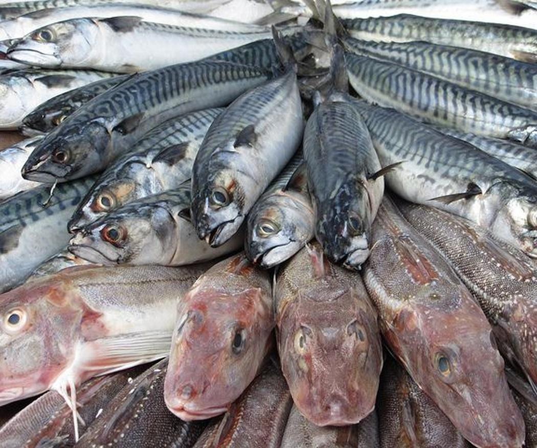 Por qué es tan bueno comer pescado
