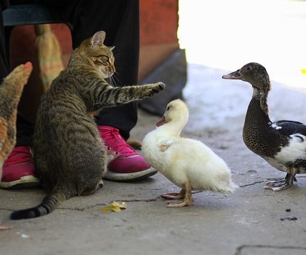 ¿Los gatos son omnívoros o carnívoros?