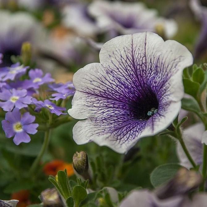 5 plantas florales ideales para el verano