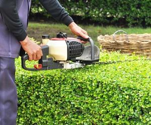 Profesionales en el mantenimiento de jardines en Alicante