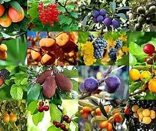 Árboles frutales y semillas