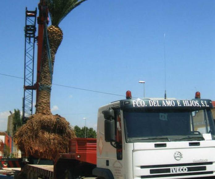 Transporte de materiales: Nuestros servicios de Francisco del Amo e Hijos