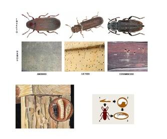 Tratamientos para termitas: Servicios de ENESA CONTINENTAL