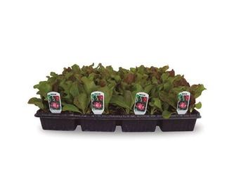 Planta de flor: Productos de Garden La Palma