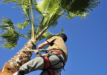 Poda de árboles y palmeras