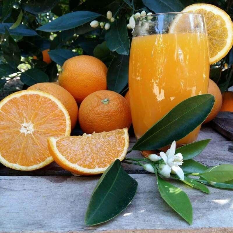 Naranjas zumo mediano 10 kg: Productos de Naranjas Julián