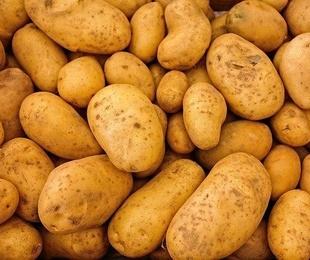 La patata de Galicia