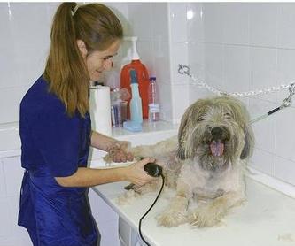 Profesionales de la estética e higiene: Servicios Veterinarios   de Huellas Clínica Veterinaria