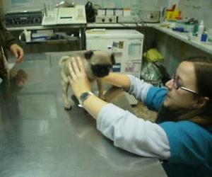 Consulta veterinaria Zaragoza
