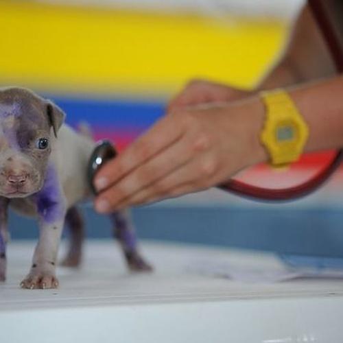 Consulta veterinaria para mascotas en Leioa