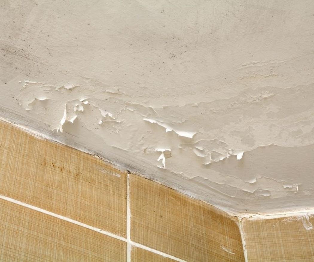 Protege tu salud eliminando las humedades de tu casa