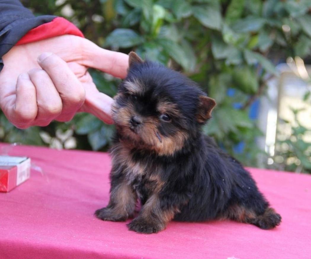 ¿Comprar una mascota en un criadero de perros? Descubre los motivos