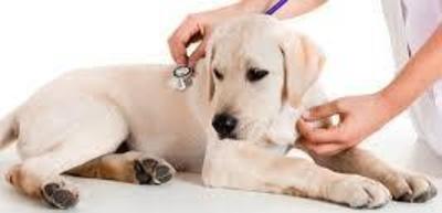 Todos los productos y servicios de Veterinarios: Centro Veterinario Isla Mascota