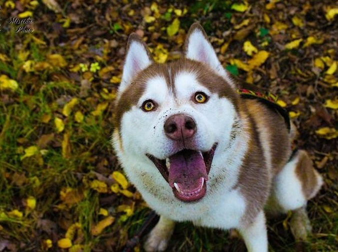 ¿Debo ir al veterinario si mi perro vomita?