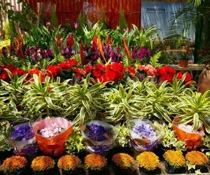 Centro de jardinería en Cartagena