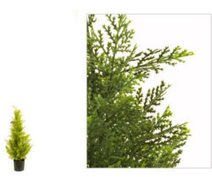 Ciprés 77cm Cedar