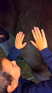 Cursillos Inclusivos Aprendizaje con Caballos 2018