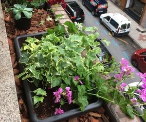 Jardineras en balconeras de domicilio