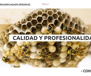 Empresa de fumigación en Las Palmas | Flodesin