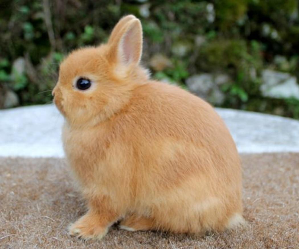 Cuidados básicos para el conejo doméstico