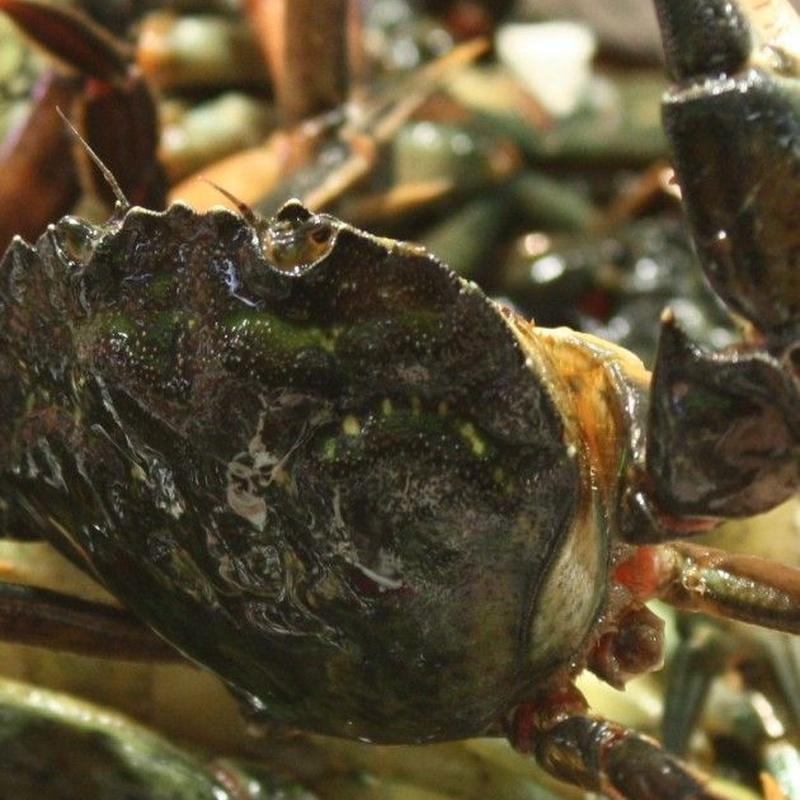 Marisco fresco vivo: Servicios de Pescados Cano