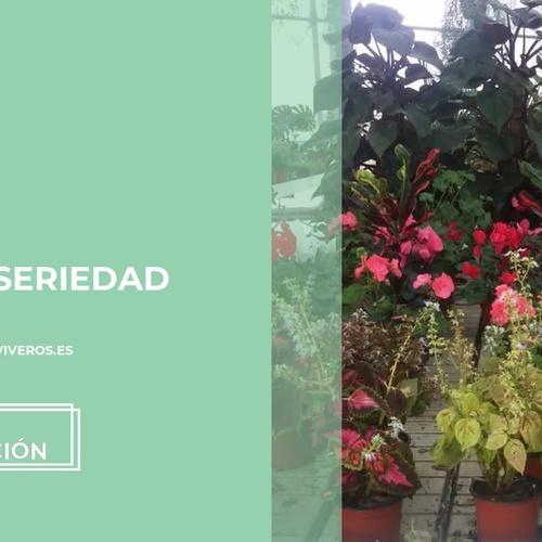Proyectos de paisajismo en Murcia | Marga Garden