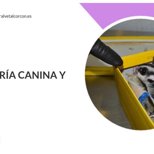 Clínica veterinaria en Alcorcón | Clínica Veterinaria Centralvet