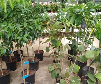Regalos: Productos trebol garden de Trébol Garden