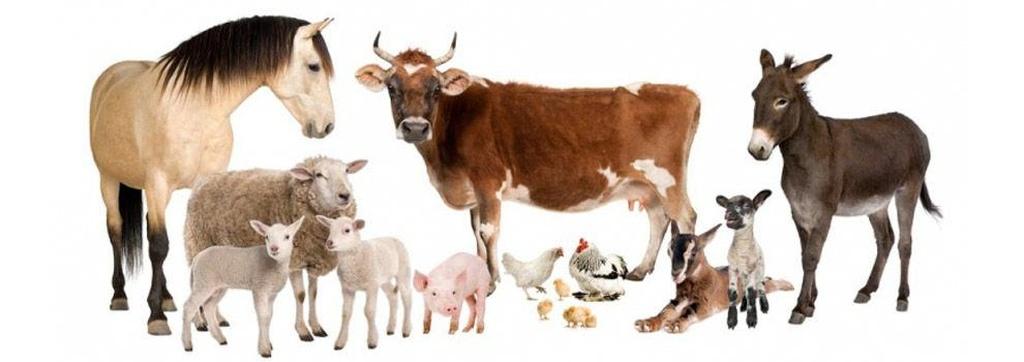 Piensos para animales en Arucas | Casa Clemente, La Cas de los Piensos y las Semilals