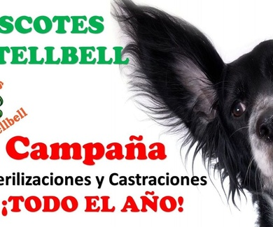 CAMPAÑA ESTERILIZACIONES Y CASTRACIONES TODO EL AÑO EN Mascotes Castellbell