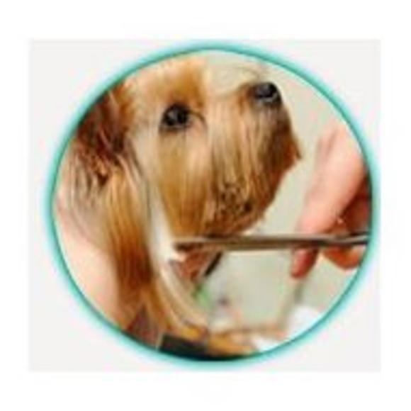 Peluquería : Servicios de Clínica Veterinaria Roncal